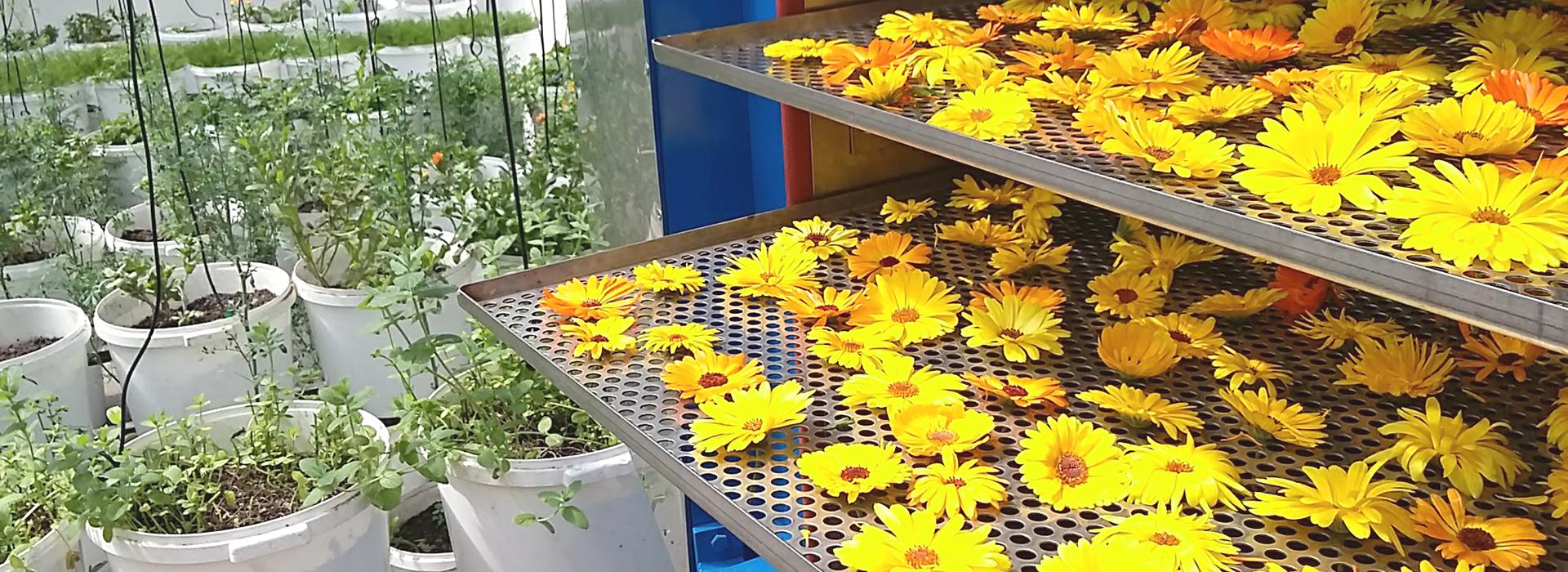 Flores-Hierbas-artsoap